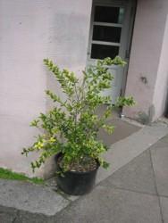 Pflanzen für den Schulhof